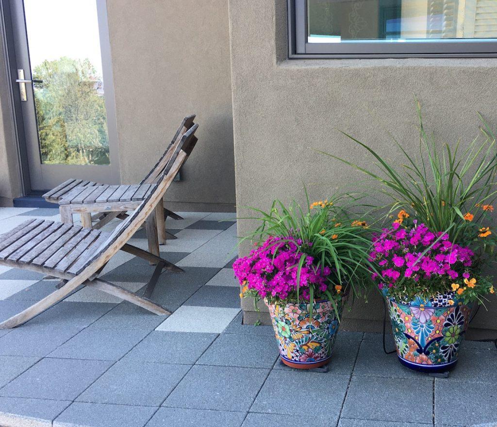 Planting Pot dianthus